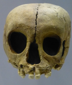 NeanderJuvenile