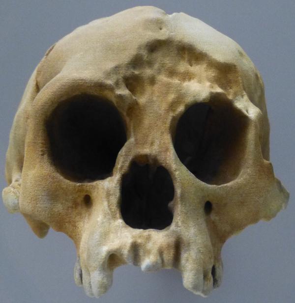 FloresSkull
